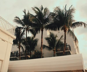 theme and palm trees image