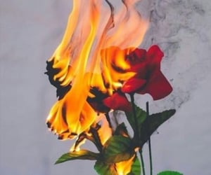 fire, rose, and red image