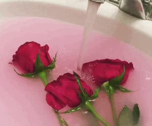 aesthetic, pink, and rose image