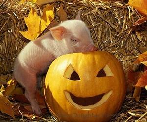 pig and piggy image