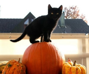 cat, pumpkin, and Halloween image