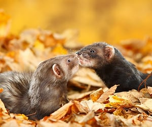 adorable, fall, and fall in love image