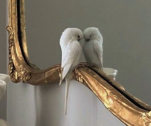 bird, mirror, and animal image