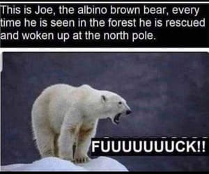 animals, bear, and funny image