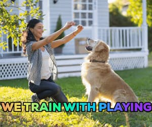 gif and dog training ; love dogs image