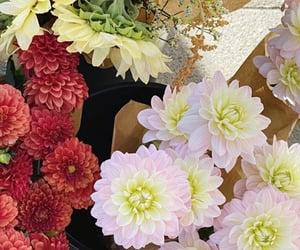 colours, dahlia, and flower market image