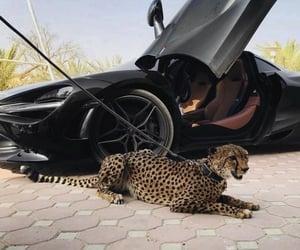 animal, Bentley, and car image