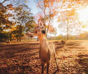 animal, autumn, and nature image