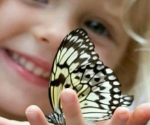 butterfly, girl, and nature image