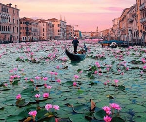 flowers, italy, and venice image