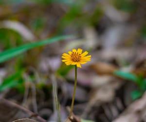 camera, macro, and flower image
