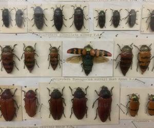 aesthetic, alternative, and beetles image