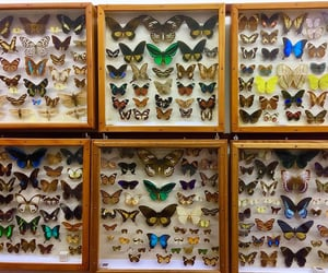 aesthetic, alternative, and butterflies image