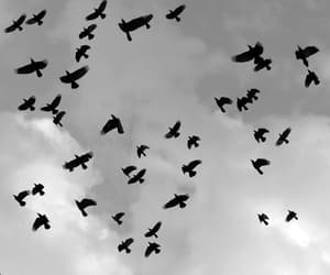 animals, bird, and black and white image