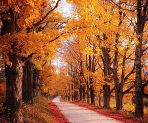 autumn, ryan resatka, and instagram image