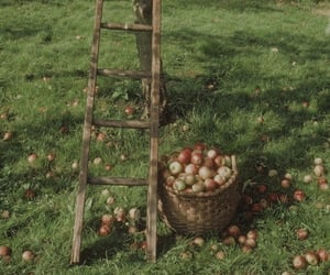 apple tree, ladder, and red image
