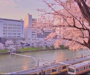 japan, aesthetic, and pink image
