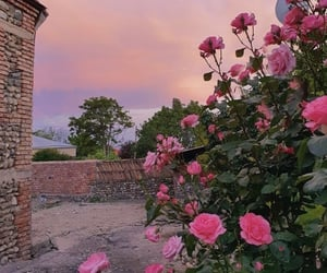 beautiful, exteriors, and roses image
