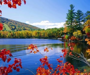beauty, fall, and flowers image