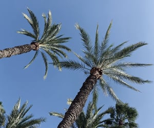 blue, sky, and 🌴 image