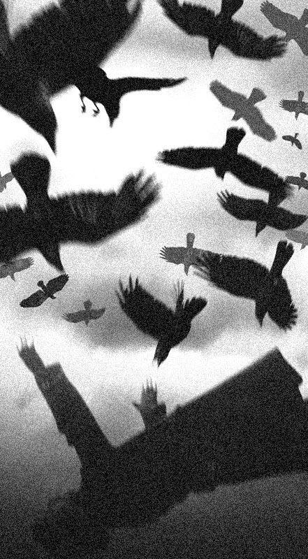 bird, black and white, and black image