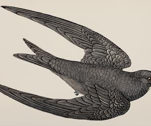 british birds, detailed af, and a swift image