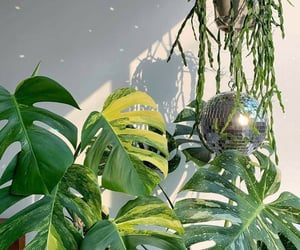 aesthetic, plant, and hanging plant image