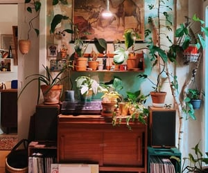 aesthetic, indoor, and plant image