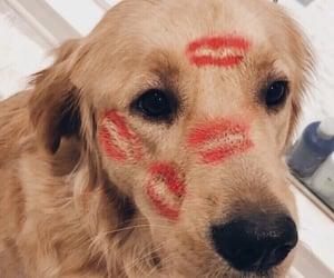 adorable, dog, and kiss image