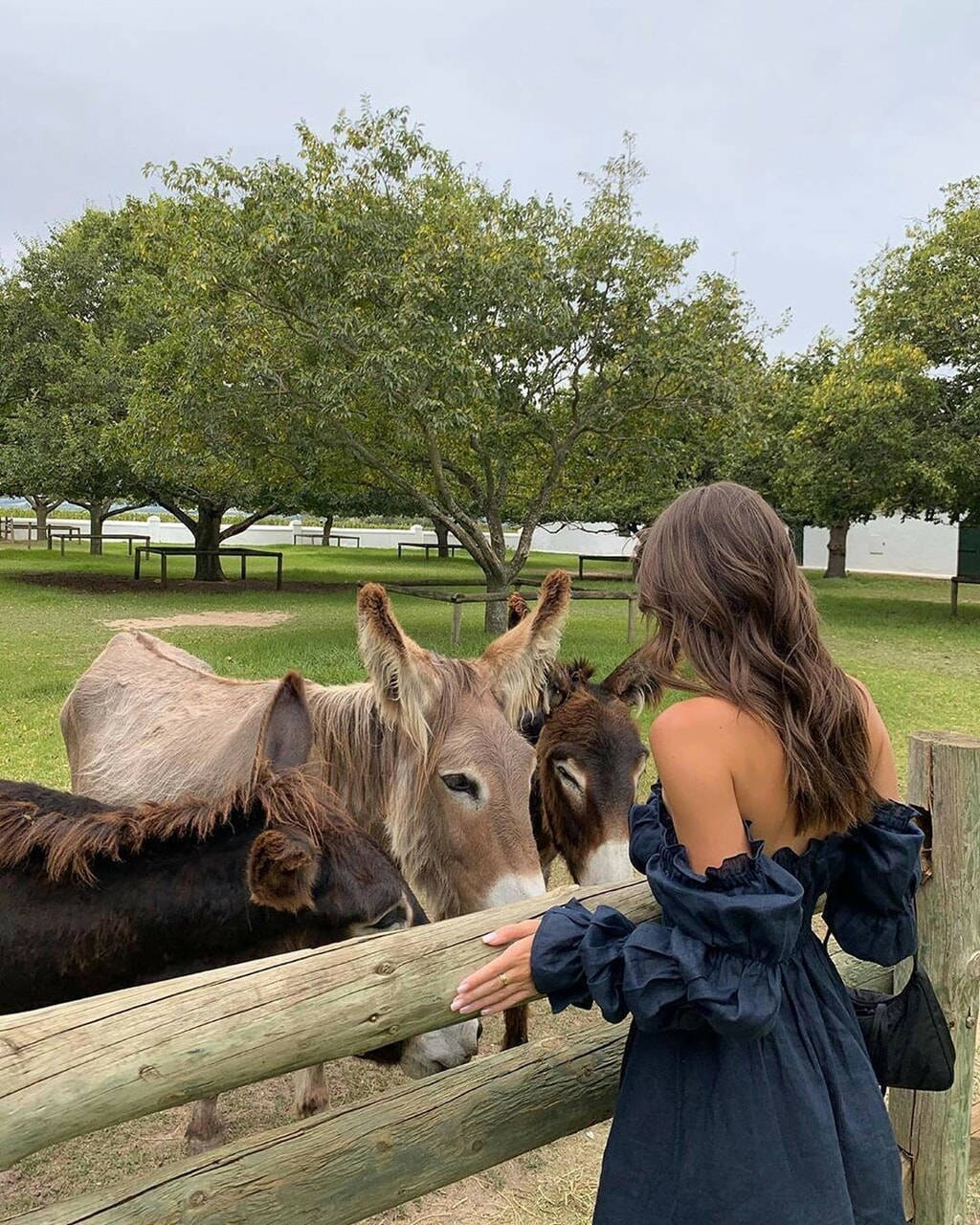 animal, donkey, and girl image