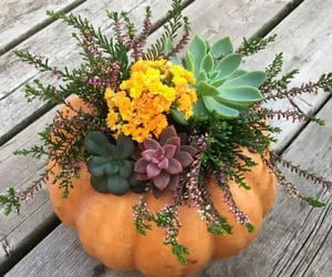 decoracion, hogar, and plantas image