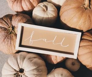 pumpkin, pumpkins, and autumn image