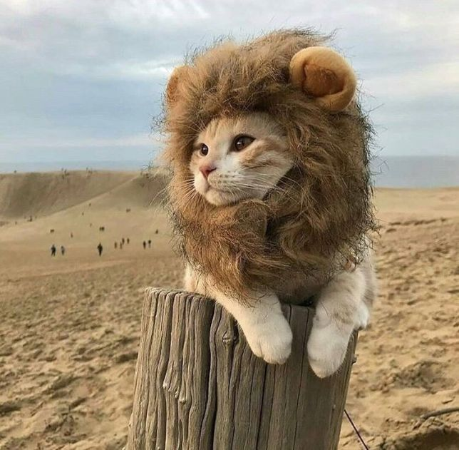 animals, catlover, and cats image