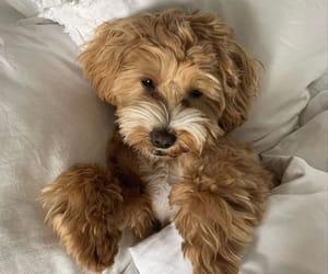 dog, sweet, and animals image
