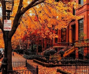 autumn, leaves, and boston image