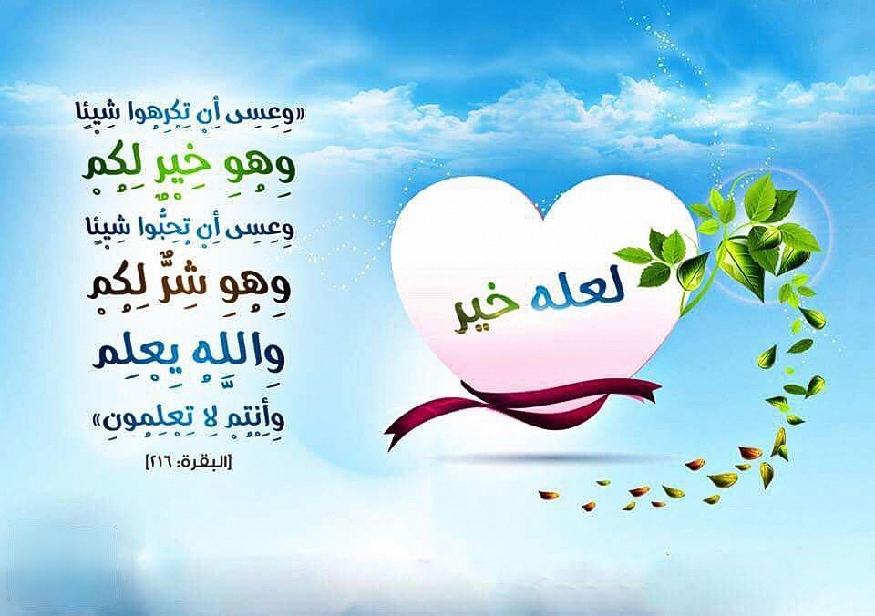 article, حكمة حكم, and قصص image