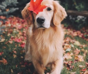 animals, dogs, and leaves image