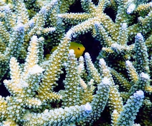 coral, sirena, and underwater image