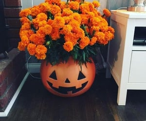 autumn, flowers, and Halloween image