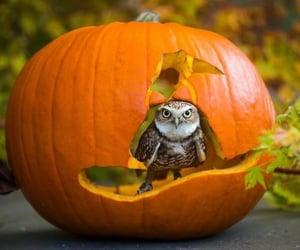 animals, aww, and autumn image