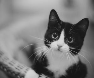 kitty, cat, and cute image