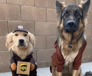 parcel, cute, and puppies image