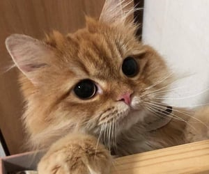 adorable, animal, and awesome image