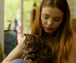 cat, drama, and looking for alaska image