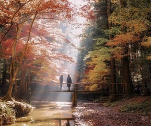 autumn, japan, and light image