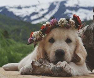 mountain, puppy, and nature image