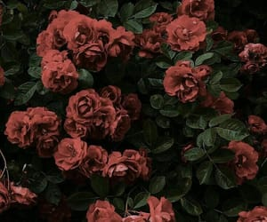 aesthetic, rose, and wallpaper image