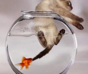 cat, fish, and life image