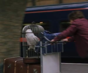 harry potter, hedwig, and train station image