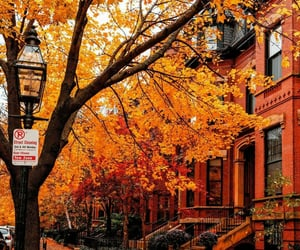 boston, fall pictures, and autumn vibes image